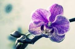 Makro- i zakończenie fotografie orchidea Fotografia Royalty Free