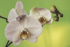 Makro- i zakończenie fotografie orchidea Obrazy Stock