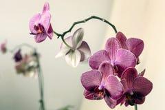 Makro- i zakończenie fotografie orchidea Fotografia Stock