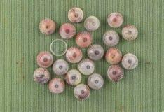 Makro- insektów jajek szczegół zamknięty w górę tapetowego tła obrazy royalty free