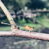 Makro- insekt obraz royalty free