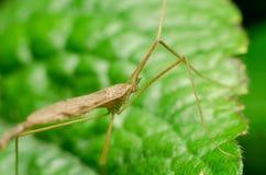 Makro- insekt w lesie zdjęcia royalty free
