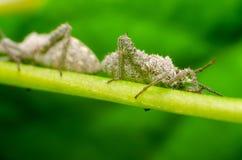 Makro- insekt w lesie zdjęcie royalty free