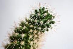 Makro- Kaktusowy abstrakt zdjęcia royalty free