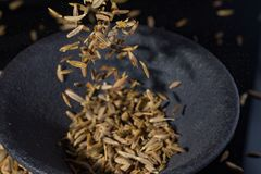 Makro- kolekcja, aromatyczny wysuszony przyprawowy kminu zakończenie up obrazy royalty free
