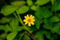 Makro- kolorów żółtych kwiaty zdjęcia stock