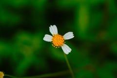 Makro- kolorów żółtych kwiaty obraz stock