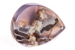 Makro- kopalina kamienia agat Dendroagate na białym tle Zdjęcia Stock