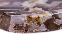 Makro- kopalina kamienia agat Dendroagate na białym tle Zdjęcie Royalty Free