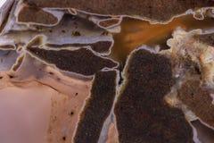 Makro- kopalina kamienia agat Dendroagate na białym tle Fotografia Stock