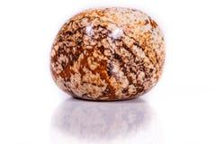 Makro- kopaliny skały jaspisu krajobraz piaskowaty na białym tle Zdjęcia Stock