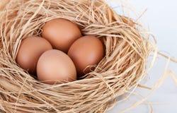 Makro- krótkopęd brown jajka przy siana gniazdeczkiem w kurczaka gospodarstwie rolnym Fotografia Stock