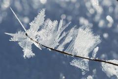 Makro- Krystaliczny lodowacenie na gałąź Zdjęcia Stock