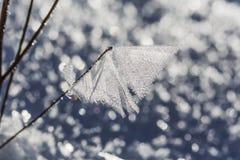 Makro- Krystaliczny lodowacenie na gałąź Fotografia Stock