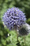 Makro- kwiat obrazy royalty free