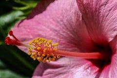 Makro- kwiat Obrazy Stock