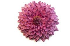 Makro- kwiat fotografia stock