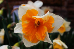 Makro- kwiat Zdjęcia Stock