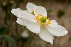 Makro- kwiat Obraz Stock