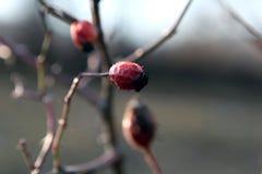 Makro- kwiat Zdjęcia Royalty Free