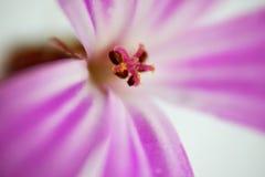 Makro- kwiat wśrodku Zdjęcie Royalty Free