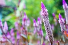 Makro- kwiaty Zdjęcie Stock