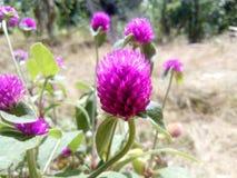 Makro- kwiaty zdjęcie royalty free