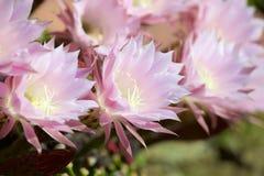 Makro- kwiaty fotografia royalty free