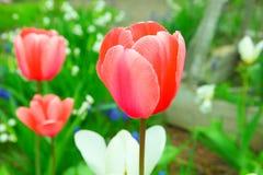 Makro- kwiaty i farby Fotografia Stock
