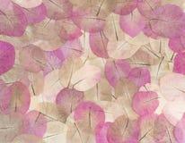Makro- liścia zbliżenie Zdjęcia Royalty Free