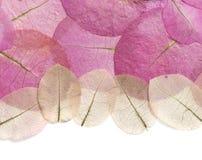 Makro- liścia zbliżenie Zdjęcie Stock