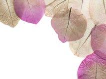 Makro- liścia zbliżenie Zdjęcia Stock