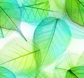 Makro- liści bezszwowa tekstura Obraz Stock