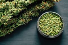 Makro- marihuana z trichomes i miażdżąca świrzepa w ostrzarzu dla siekać canapis na czarnym stole Fotografia Stock