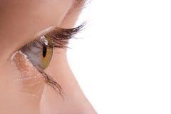 Makro menschliches Auge stockbilder