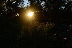 Makro mit einer dekorativen wilden Feldblume auf Hintergrund des bewölkten Himmels mit Sonnenuntergang stockbild