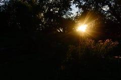 Makro mit einer dekorativen wilden Feldblume auf Hintergrund des bewölkten Himmels mit Sonnenuntergang lizenzfreies stockfoto