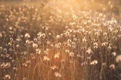 Makro mit extrem flachem DOF der Grasblume im Pastell lizenzfreie stockbilder