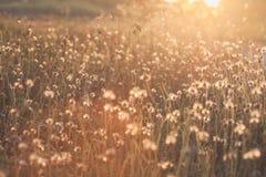 Makro mit extrem flachem DOF der Grasblume im Pastell stockfotografie