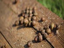 Makro- mknący ślimaczek zbiory