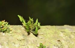 Makro Moss Photography royaltyfria bilder