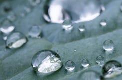 Makro nah oben vom reinen Regentropfen auf grünem Blatt mit venation Lizenzfreie Stockbilder