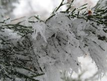 Makro- śnieg na nowym roku trzy Obrazy Royalty Free