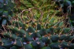 Makro- obrączki ślubne następnie na kaktusowej rośliny plamie Zdjęcie Royalty Free