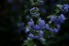 Makro- obrazek roślina Fotografia Royalty Free