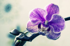 Makro- och närbildfoto av orkidén Royaltyfri Fotografi