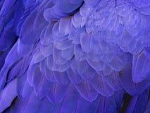 Makro på en Hyacinth Macaw Feathers arkivbilder