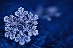 Makro- płatka śniegu kryształ zdjęcia stock