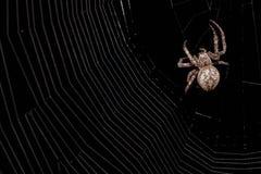 Makro- pająk na czarnym tle obraz royalty free