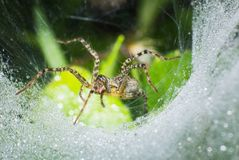 Makro- pająk na sieci, makro- insekt fotografia stock